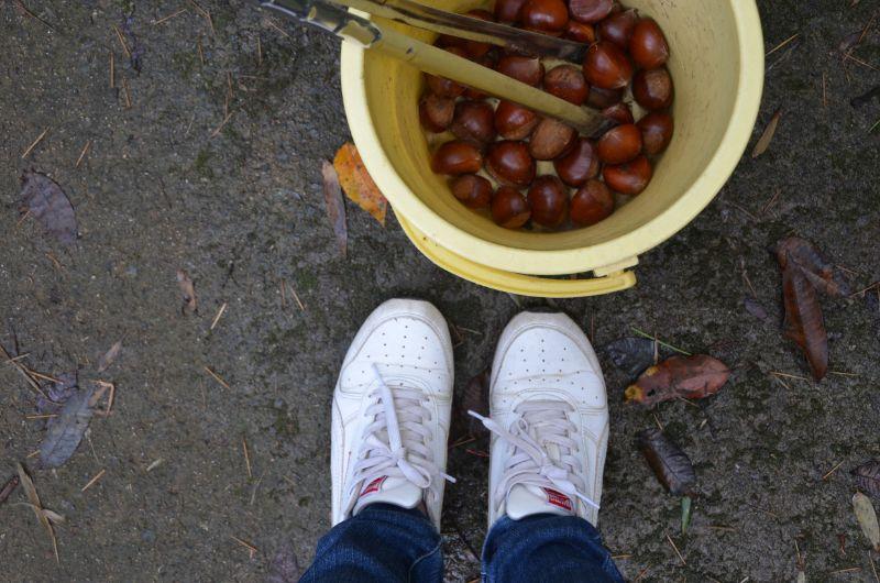 佐賀の栗拾いは汚れてもいい靴