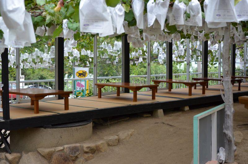 田主丸のぶどう狩りスポット緑峰園はお弁当持ち込み可能