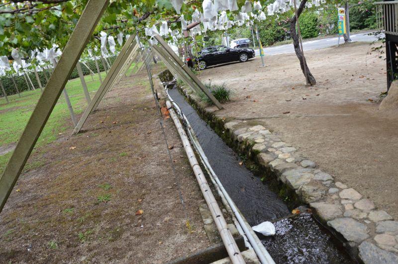 田主丸のぶどう狩りスポット緑峰園に流れる小川