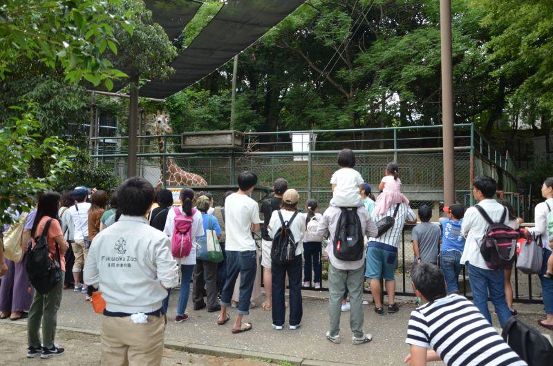 福岡市夜の動植物園のキリンスポットガイド